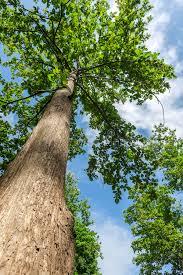 Van boom naaar droom